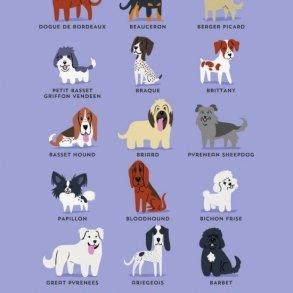 โปสเตอร์น่ารักๆ..สายพันธุ์สุนัขตามถิ่นกำเนิด 14 - Illustrator