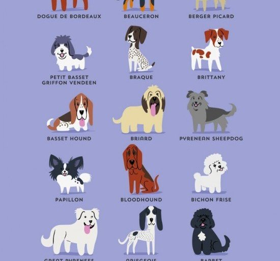 โปสเตอร์น่ารักๆ..สายพันธุ์สุนัขตามถิ่นกำเนิด 24 - หมา