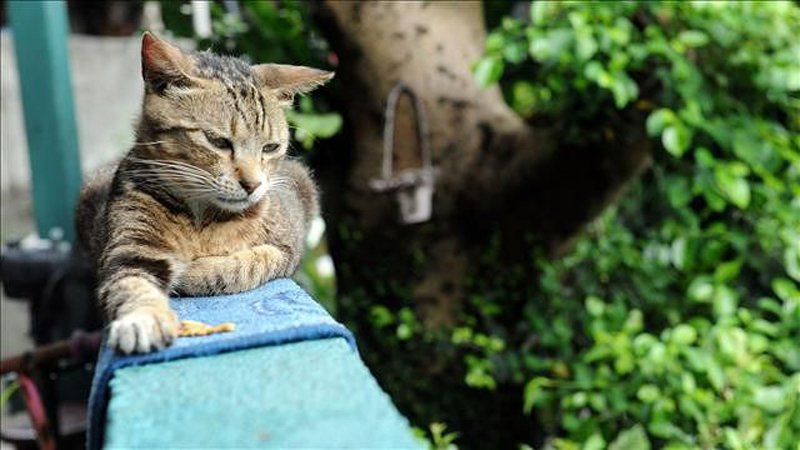 299111 Village Where Cats Rule หมู่บ้านแมวเหมียว Houtong Cat Village บนเกาะไต้หวัน