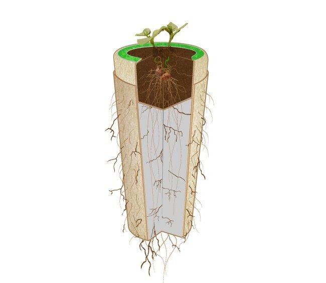 Bios Urn โกศจากวัสดุย่อยสลายได้ง่าย เปลี่ยนเถ้ากระดูกเป็นต้นไม้ 13 - biodegradable