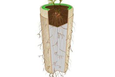 Bios Urn โกศจากวัสดุย่อยสลายได้ง่าย เปลี่ยนเถ้ากระดูกเป็นต้นไม้ 15 - forest