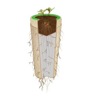 Bios Urn โกศจากวัสดุย่อยสลายได้ง่าย เปลี่ยนเถ้ากระดูกเป็นต้นไม้ 21 - biodegradable