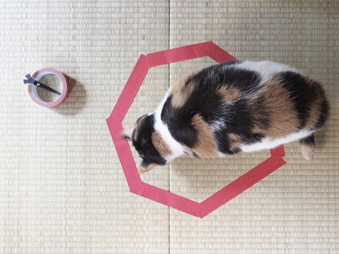 IMG 6812 วิธีล่อแมวมาติดกับดัก ทำเองก็ได้ ง่ายๆ 3 ขั้นตอน