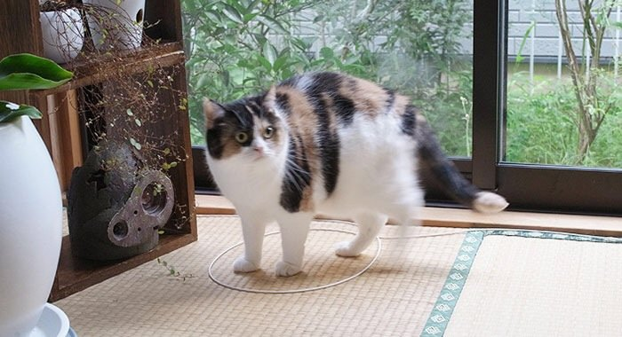 IMG 6817 วิธีล่อแมวมาติดกับดัก ทำเองก็ได้ ง่ายๆ 3 ขั้นตอน