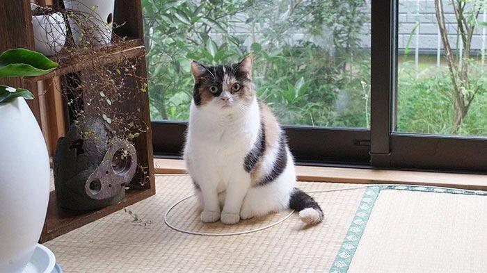 IMG 6818 วิธีล่อแมวมาติดกับดัก ทำเองก็ได้ ง่ายๆ 3 ขั้นตอน