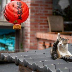 """หมู่บ้านแมวเหมียว """"Houtong Cat Village"""" บนเกาะไต้หวัน 31 - pet"""