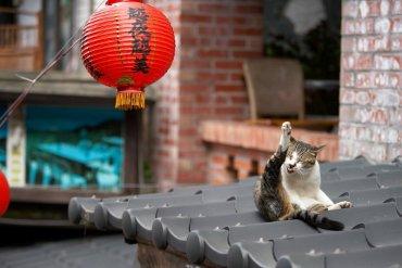 """หมู่บ้านแมวเหมียว """"Houtong Cat Village"""" บนเกาะไต้หวัน 24 - ท่องเที่ยว"""