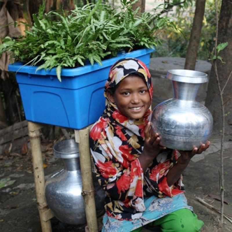 dezeen Plant based water purifying system named Idea that will change the world 1sq ระบบกรองน้ำแบบธรรมชาติบำบัด
