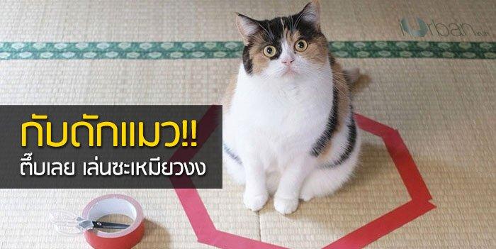 วิธีล่อแมวมาติดกับดัก ทำเองก็ได้ ง่ายๆ 3 ขั้นตอน 13 - pet