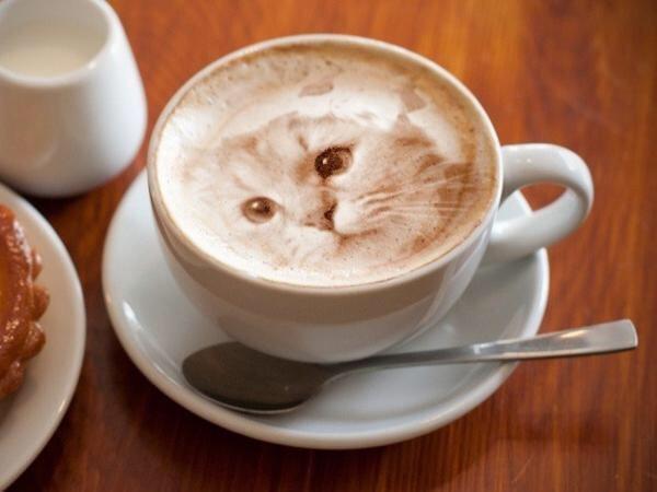 IMG 7086 Latte Art ภาพแมวบนฟองนม.. ฝีมือขั้นเทพ! ... แต่แหม ใครสังเกตดีๆ มาจับผิดกัน
