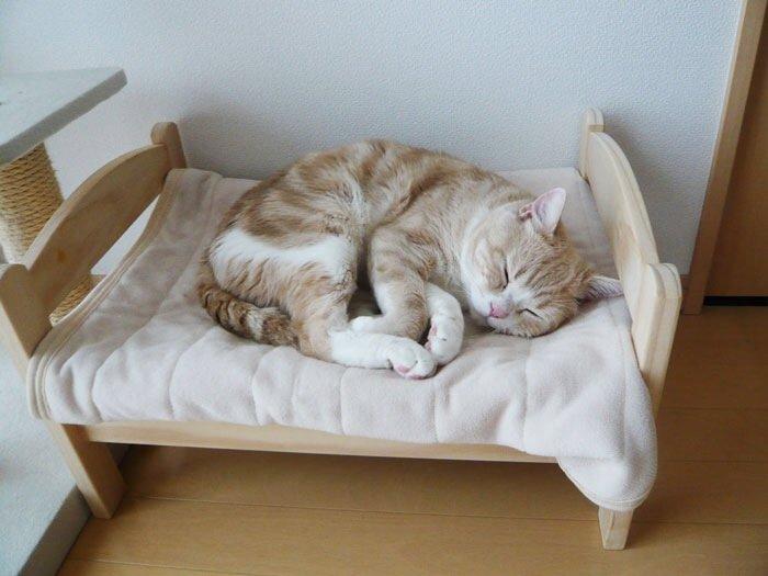 เตียงแมว.. จากเตียงตุ๊กตา IKEA  13 - IKEA (อิเกีย)