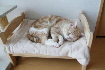 เตียงแมว.. จากเตียงตุ๊กตา IKEA 13 - เตียงตุ๊กตา