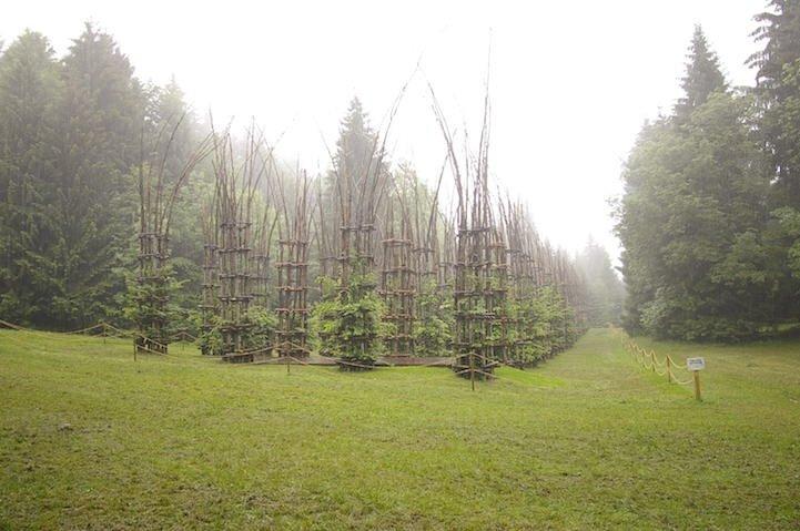IMG 8428 โบสถ์ต้นไม้..ตัวอย่างงานnatural architectureที่น่าประทับใจที่สุดในโลกชิ้นหนึ่ง