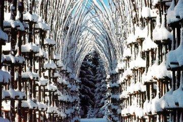 """""""โบสถ์ต้นไม้""""..ตัวอย่างงาน""""natural architecture""""ที่น่าประทับใจที่สุดในโลกชิ้นหนึ่ง  4 - landscape"""