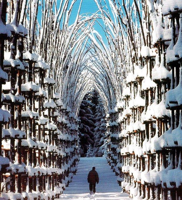 IMG 8429 โบสถ์ต้นไม้..ตัวอย่างงานnatural architectureที่น่าประทับใจที่สุดในโลกชิ้นหนึ่ง