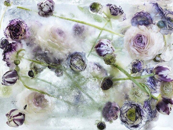 ดอกไม้ในก้อนน้ำแข็งที่กำลังละลาย..ความงามช่างมีเวลาอยู่น้อยนิด.. 13 - flower ice cube