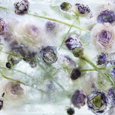 ดอกไม้ในก้อนน้ำแข็งที่กำลังละลาย..ความงามช่างมีเวลาอยู่น้อยนิด.. 14 - flower ice cube