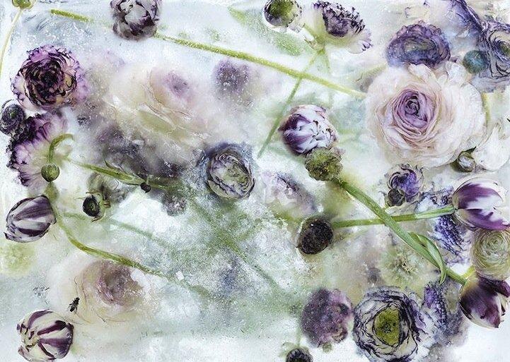 ดอกไม้ในก้อนน้ำแข็งที่กำลังละลาย..ความงามช่างมีเวลาอยู่น้อยนิด.. 15 - ภาพถ่าย