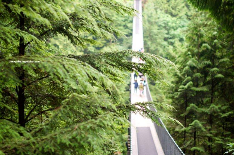Cap Bridge Jenny Photography 1 Vancouver's Capilano Suspension Bridge Park กิจกรรมสำรวจธรรมชาติและชมวิวจากบนยอดต้นไม้