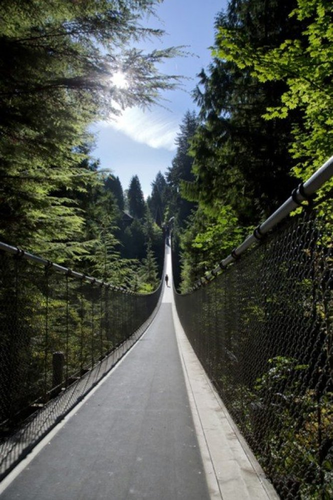 Gallery-Suspension-Bridge-Horizontal
