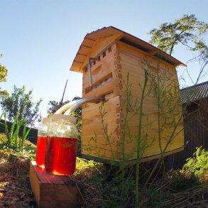 เลี้ยงผึ้ง..ได้น้ำผึ้งสดใหม่จากรัง ง่ายๆ เพียงเปิดก๊อก ไม่ทำอันตรายผึ้ง 21 - Bee