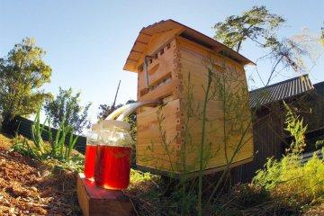 เลี้ยงผึ้ง..ได้น้ำผึ้งสดใหม่จากรัง ง่ายๆ เพียงเปิดก๊อก ไม่ทำอันตรายผึ้ง 2 - Bee