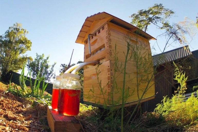 เลี้ยงผึ้ง..ได้น้ำผึ้งสดใหม่จากรัง ง่ายๆ เพียงเปิดก๊อก ไม่ทำอันตรายผึ้ง 15 - Garden