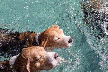 น้องหมามีที่เที่ยวอีกแล้วโฮ่ง! The Barkyard Bangkok โรงแรม ว่ายน้ำ ตัดสูท กรูมมิ่ง ช้อปปิ้ง โฮ่งๆ!! 2 - Community Centre · Pet Service