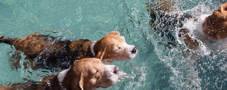 น้องหมามีที่เที่ยวอีกแล้วโฮ่ง! The Barkyard Bangkok โรงแรม ว่ายน้ำ ตัดสูท กรูมมิ่ง ช้อปปิ้ง โฮ่งๆ!! 18 - ACTIVITY