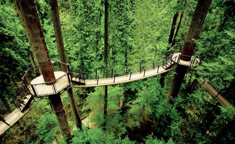 treetops large 5 Vancouver's Capilano Suspension Bridge Park กิจกรรมสำรวจธรรมชาติและชมวิวจากบนยอดต้นไม้