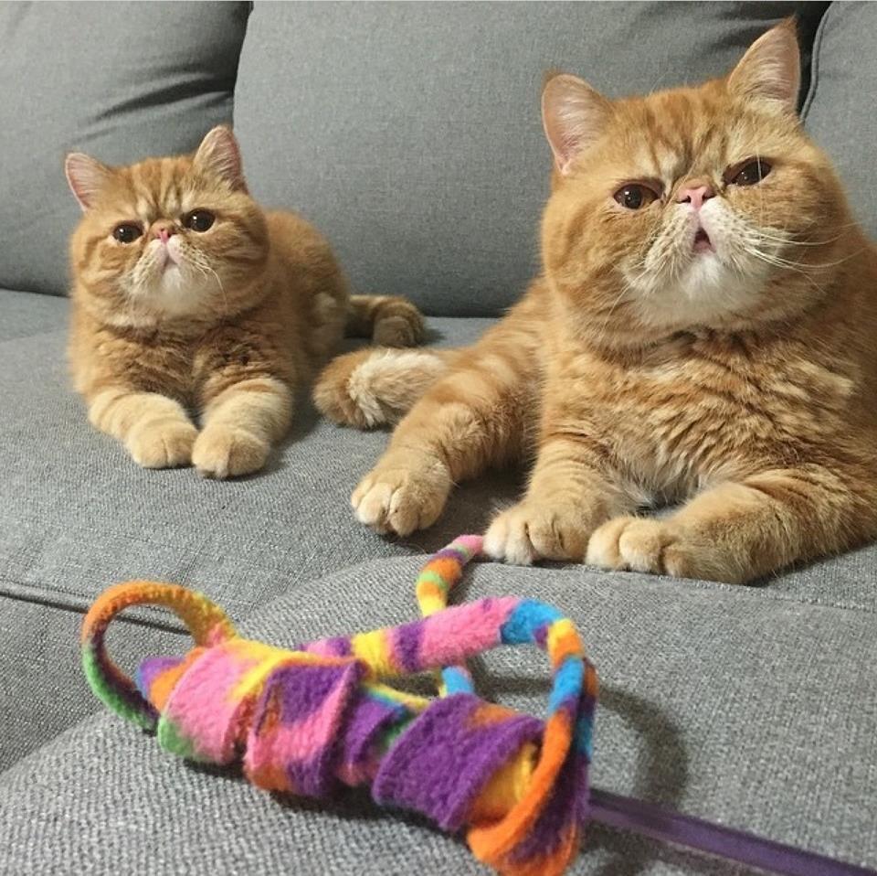 พลาดไม่ได้..คลิปฉาวแมวพลอดรัก ปลุกปล้ำกันน่ารักผุด..ผุด.. 20 - Garfield