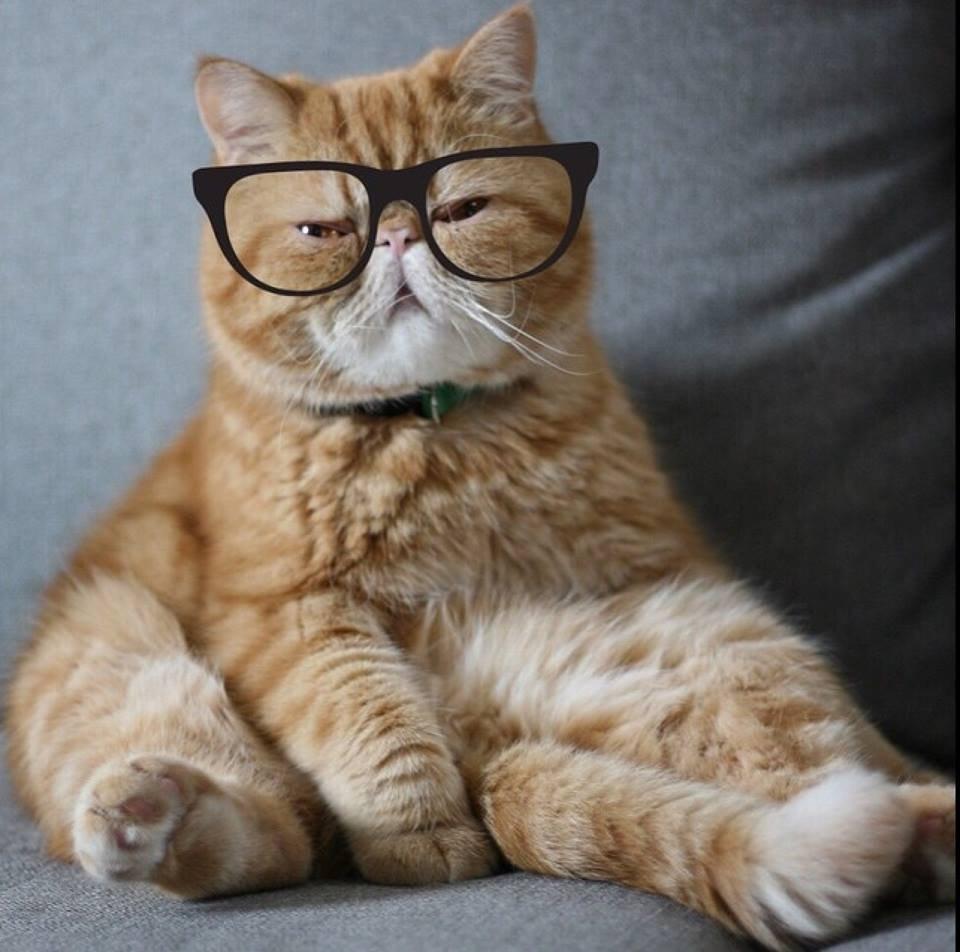 พลาดไม่ได้..คลิปฉาวแมวพลอดรัก ปลุกปล้ำกันน่ารักผุด..ผุด.. 21 - Garfield