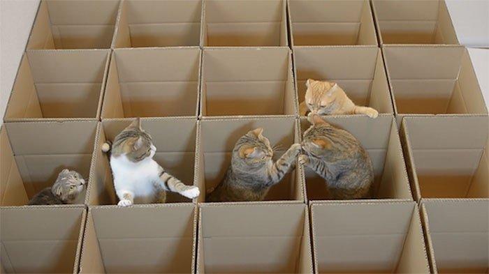 แมว9ตัว กับเขาวงกตจากกล่องกระดาษ 13 - กล่องกระดาษ