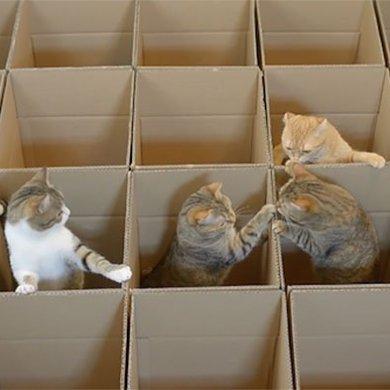 แมว9ตัว กับเขาวงกตจากกล่องกระดาษ 14 - กล่องกระดาษ