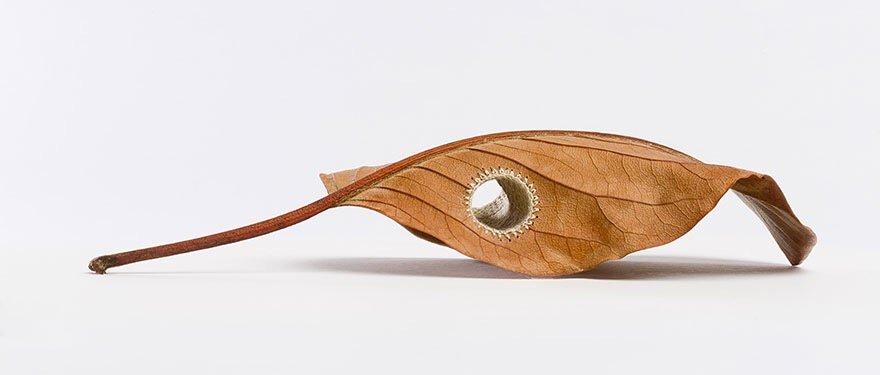 ศิลปะการถักทอ บนใบไม้.. สมดุลระหว่างความบอบบาง และแข็งแกร่ง 16 - Art & Design