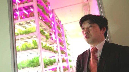 สวนผักภายในอาคารที่ใหญ่ที่สุดในโลก ปลูกผักกาดได้วันละ10,000หัว 4 - Farm