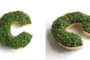 DIY : ปลูกต้นไม้ให้เป็นตัวอักษร 2 - Monogram