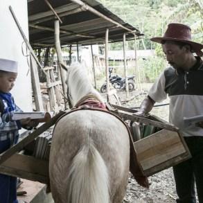 ห้องสมุดบนหลังม้า กระจายความรู้สู่ชาวอินโดนีเซีย 54 - books