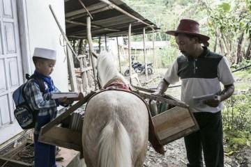 ห้องสมุดบนหลังม้า กระจายความรู้สู่ชาวอินโดนีเซีย