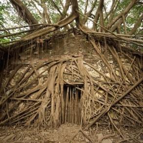 เมื่อธรรมชาติทวงคืนพื้นที่..คือการทำลายหรืองานสร้างสรรค์ 14 - abandon building