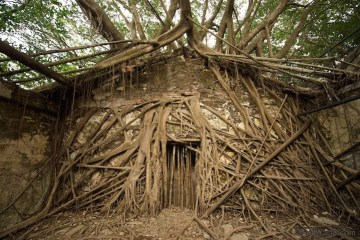 เมื่อธรรมชาติทวงคืนพื้นที่..คือการทำลายหรืองานสร้างสรรค์ 11 - abandon building