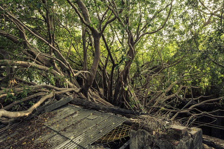 เมื่อธรรมชาติทวงคืนพื้นที่..คือการทำลายหรืองานสร้างสรรค์ 17 - abandon building