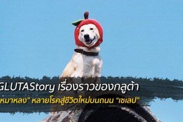 "GLUTAStory เซเลปกลูต้า จาก ""หมาหลง"" สู่ถนน ""นางแบบ"" 2 - Gluta"