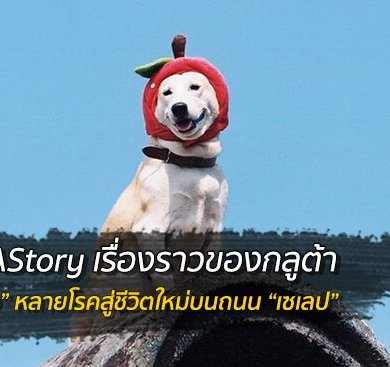 "GLUTAStory เซเลปกลูต้า จาก ""หมาหลง"" สู่ถนน ""นางแบบ"" 16 - celebrity"