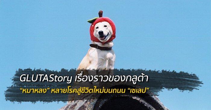 "GLUTAStory เซเลปกลูต้า จาก ""หมาหลง"" สู่ถนน ""นางแบบ"" 20 - หมา"