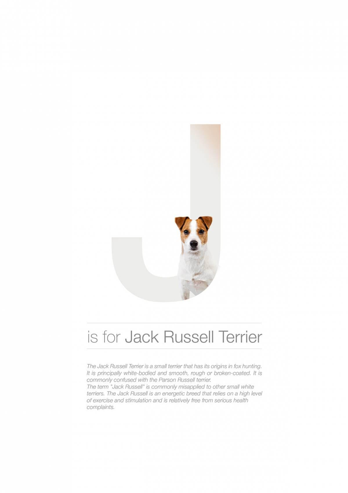 J ตัวอักษรกราฟฟิค A Z สายพันธุ์หมาไอเดียน่ารักจากดีไซน์เนอร์โรมาเนีย