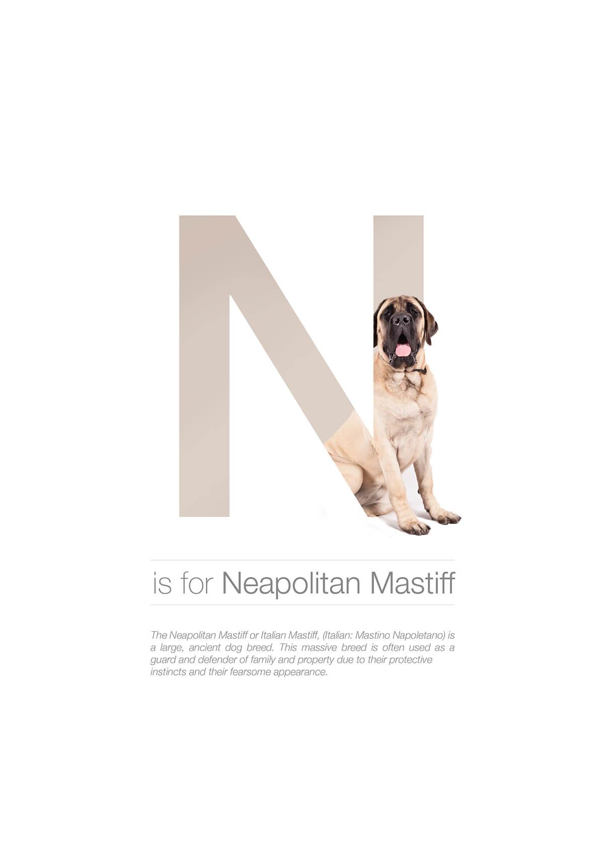N ตัวอักษรกราฟฟิค A Z สายพันธุ์หมาไอเดียน่ารักจากดีไซน์เนอร์โรมาเนีย