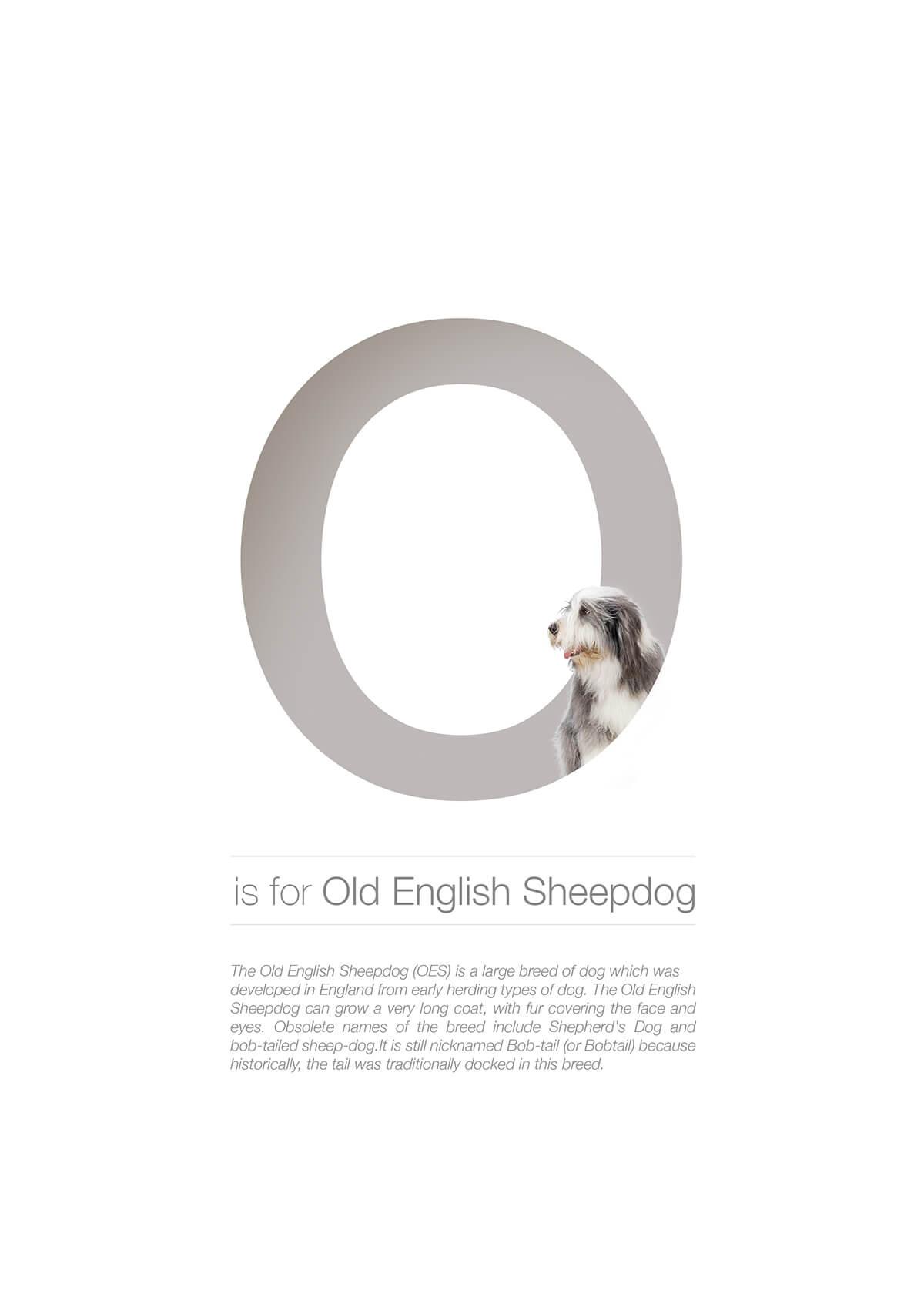 O ตัวอักษรกราฟฟิค A Z สายพันธุ์หมาไอเดียน่ารักจากดีไซน์เนอร์โรมาเนีย