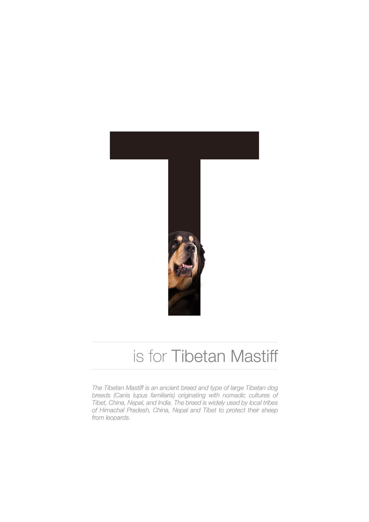 T ตัวอักษรกราฟฟิค A Z สายพันธุ์หมาไอเดียน่ารักจากดีไซน์เนอร์โรมาเนีย