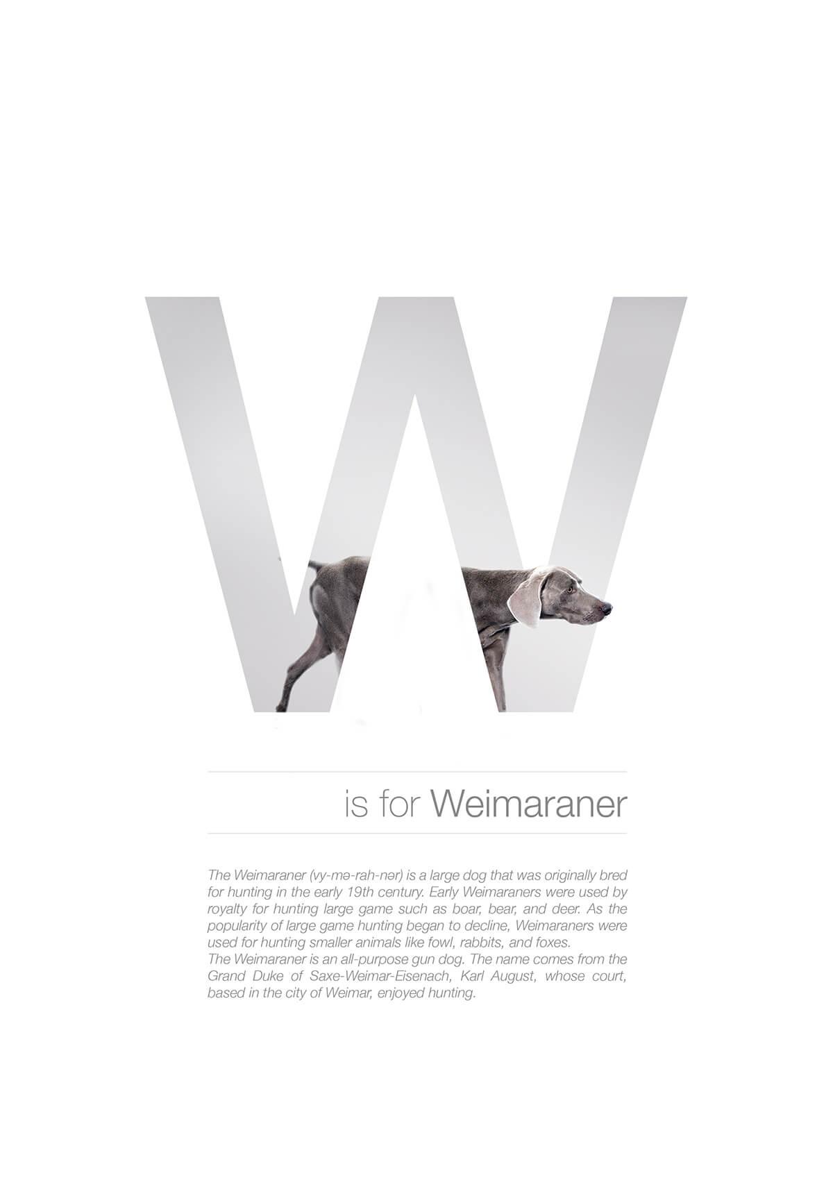 W ตัวอักษรกราฟฟิค A Z สายพันธุ์หมาไอเดียน่ารักจากดีไซน์เนอร์โรมาเนีย
